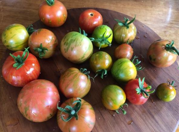 wooden platter of tomatoes